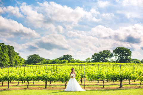picture of bride in a vineyard